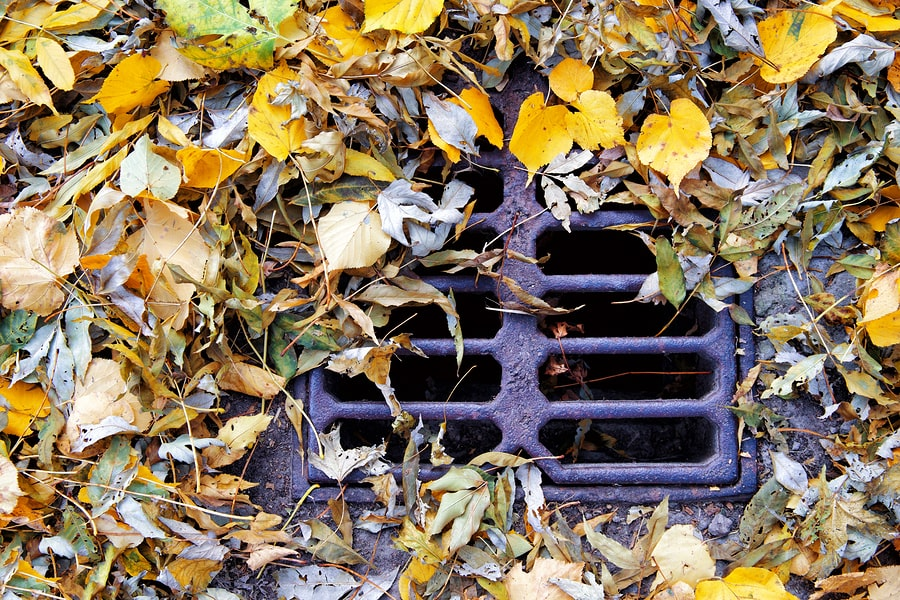 choked drain by leaves